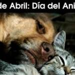 Dia-del-animal-