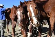 la-cria-de-caballos-es___TcKB1oXhj_1256x620__1